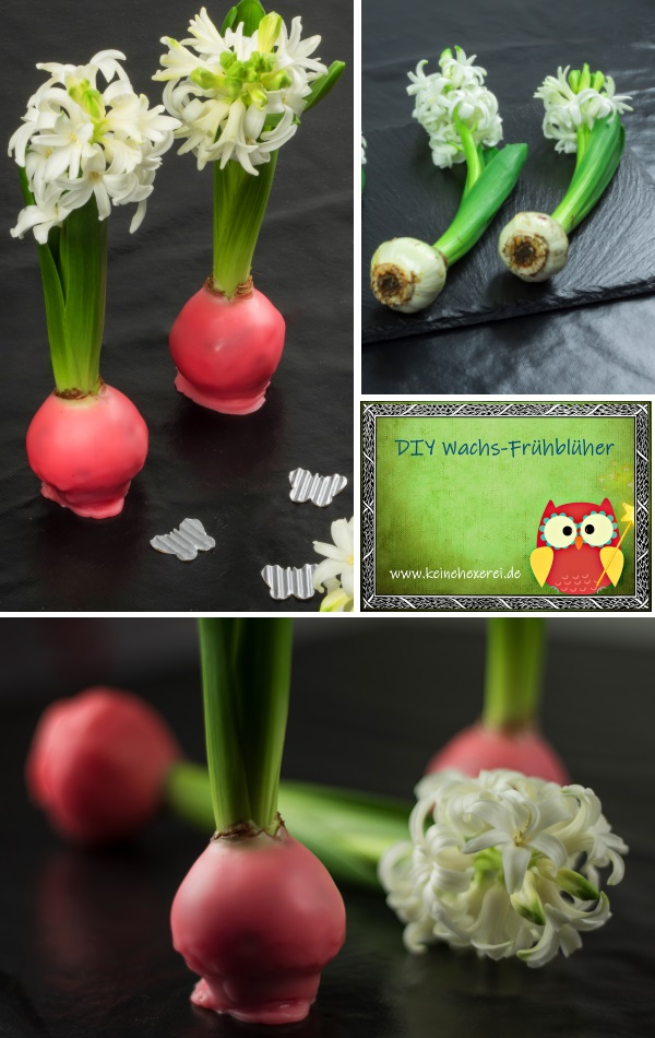 DIY Frühlingsdeko aus Blumenzwiebeln und alten Wachsresten #Deko #DIY #Frühling #Ostern #Geschenkidee